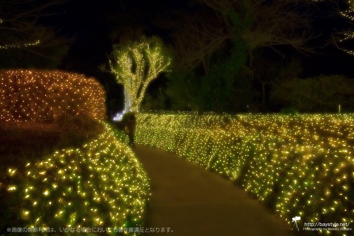 「iL CHIANTI CAFE 江の島」のすぐ側にある庭園のイルミネーション