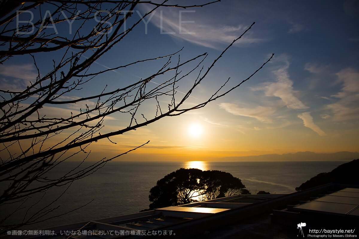 春の訪れを予感できる梅の木の小さなつぼみ