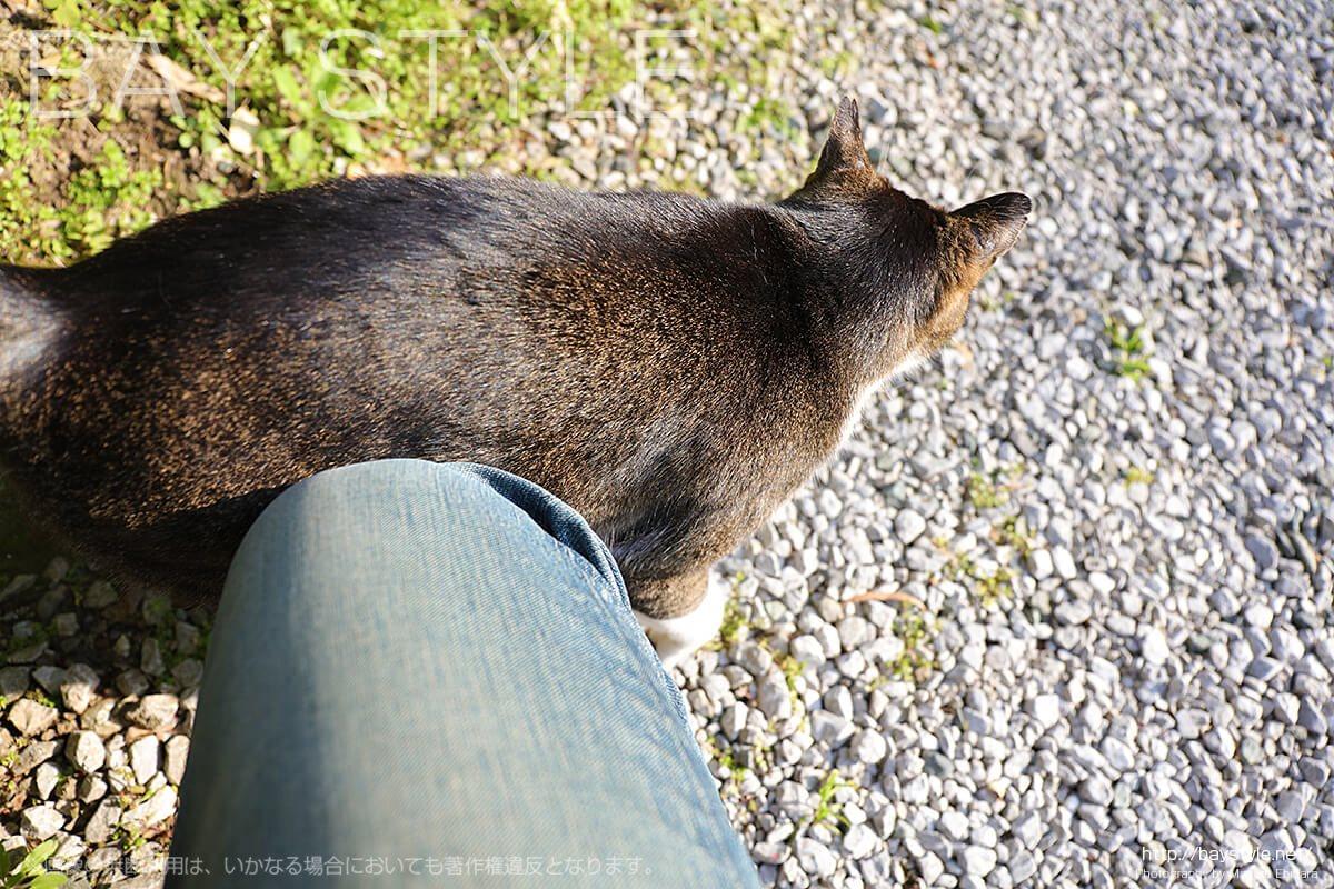 報国寺の帰りに出会ったメスの猫