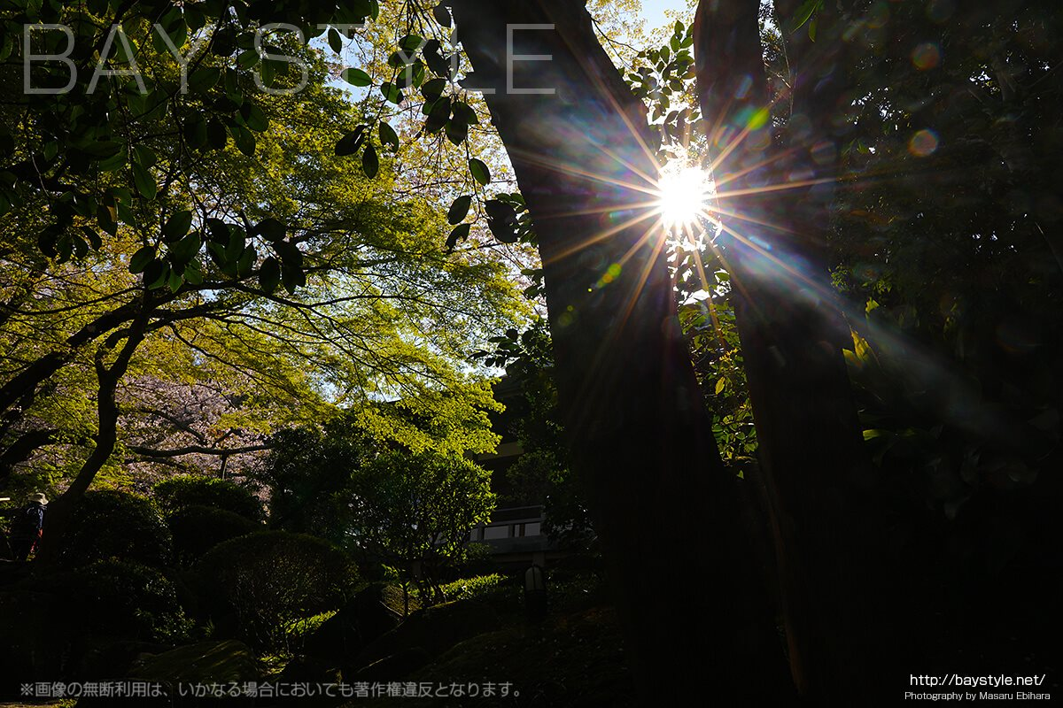 見どころ3:苔と緑が待ち受けている報国寺の入り口