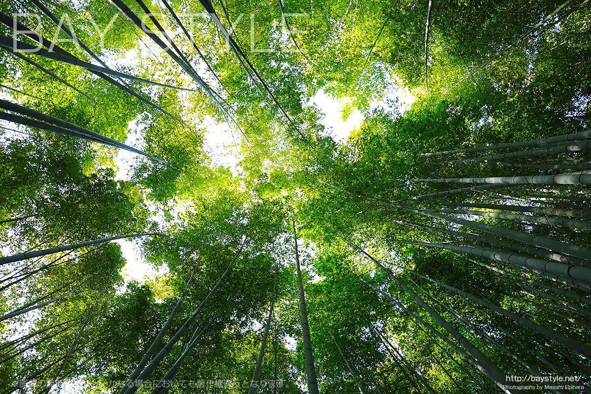 見どころ5:竹林