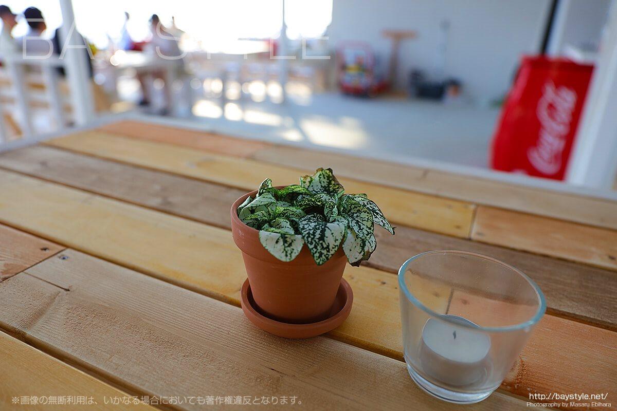 テーブル席に置かれた可愛い観葉植物