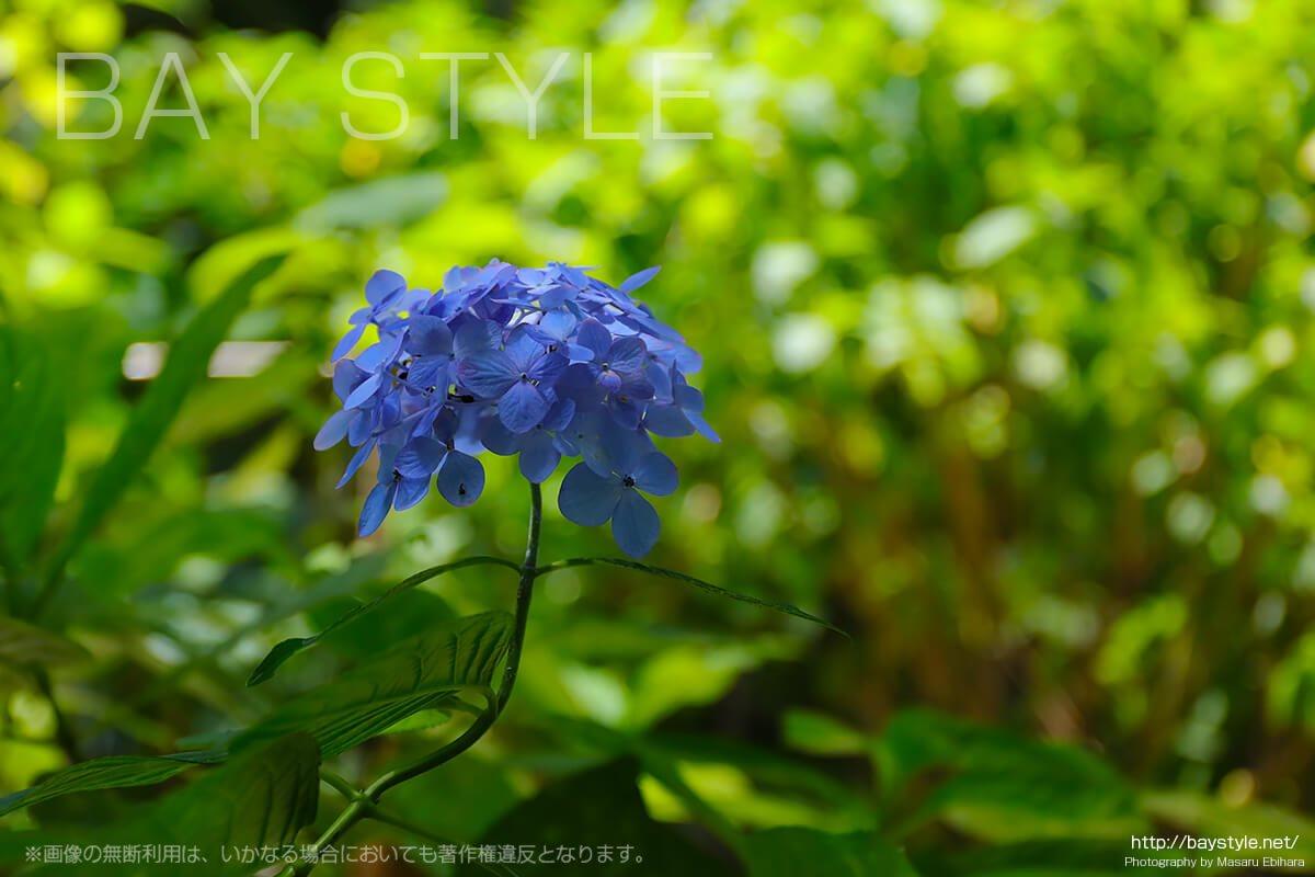 IZA鎌倉ゲストハウス(写真はイメージです)