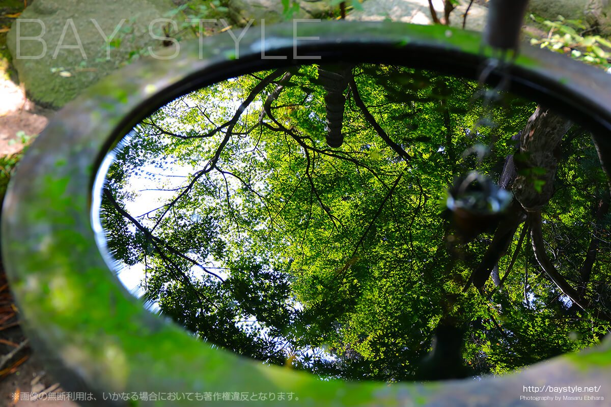 鎌倉覚園寺の水がめに反射するもみじの木