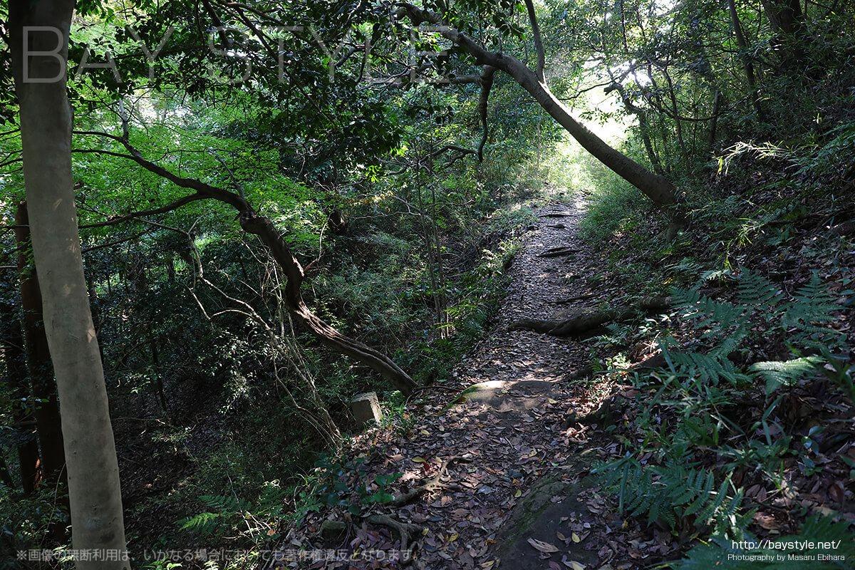 天園ハイキングコースの山道