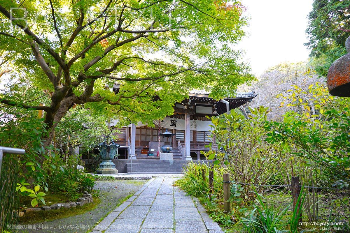 鎌倉安国論寺は紅葉、サザンカ、カイドウ、妙法桜が見所