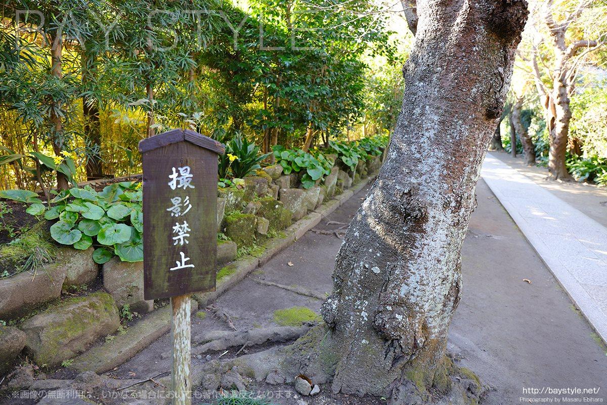 極楽寺の境内は写真撮影禁止