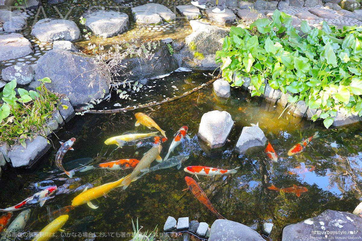 長谷寺境内の池