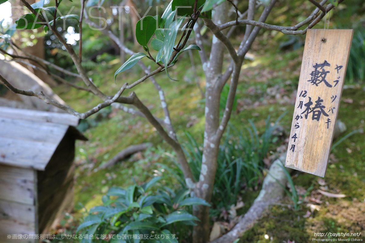 長谷寺境内の自然
