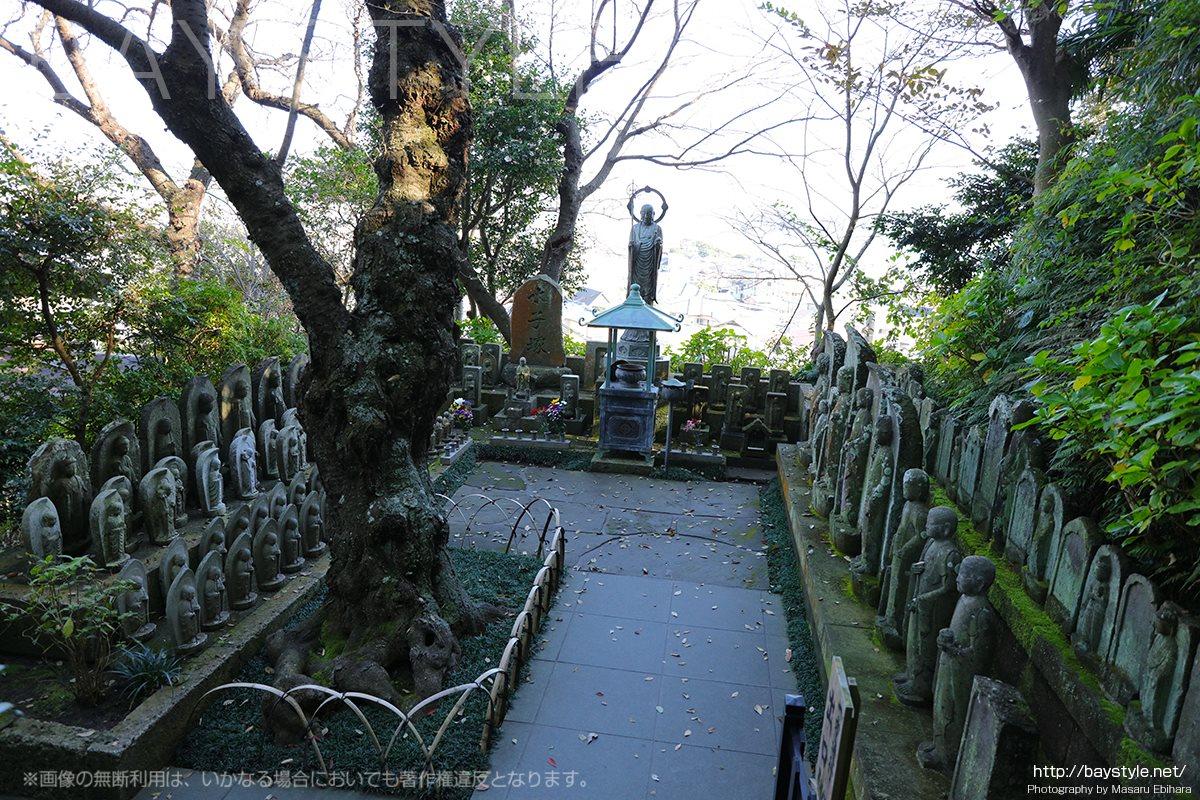 長谷寺の眺望散策路