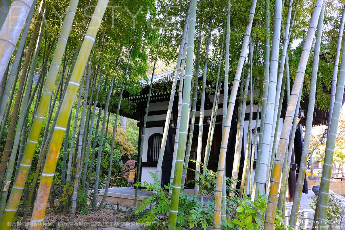 長谷寺経蔵付近の竹林