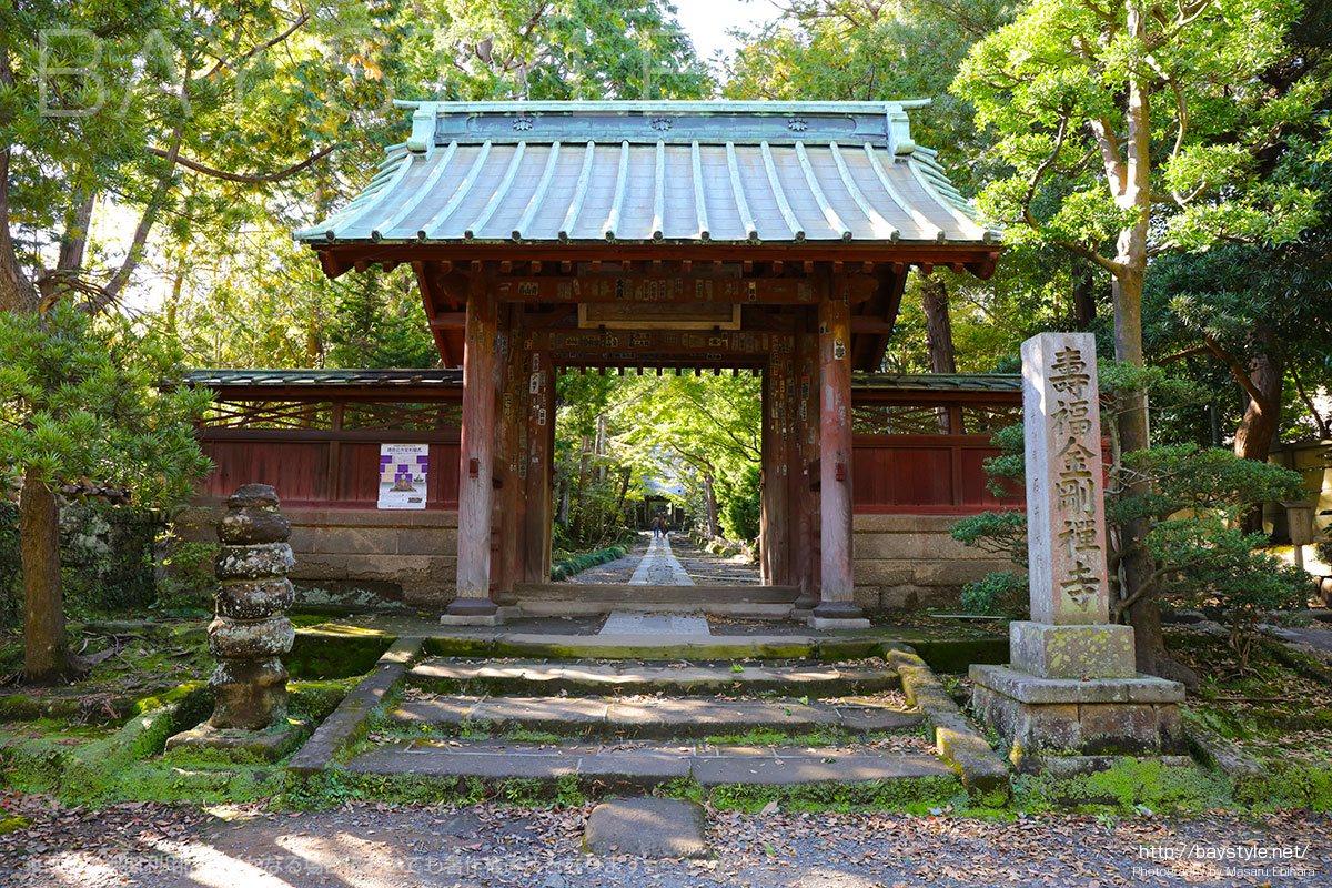 寿福寺は日本で最初にお茶を飲む習慣を伝えたお寺