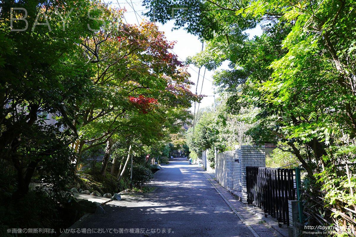 海蔵寺へと向う道