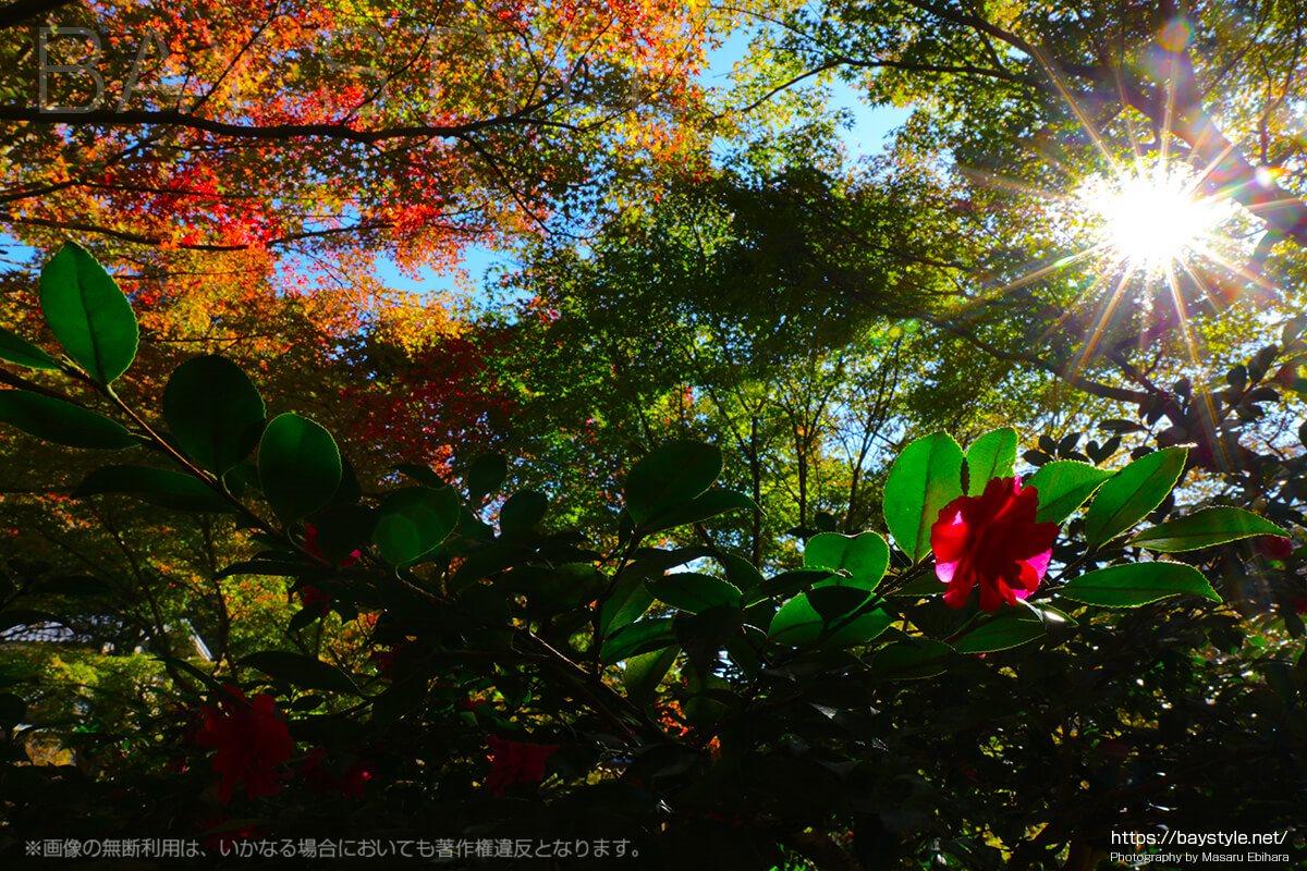 秋に撮影した覚園寺の境内の様子