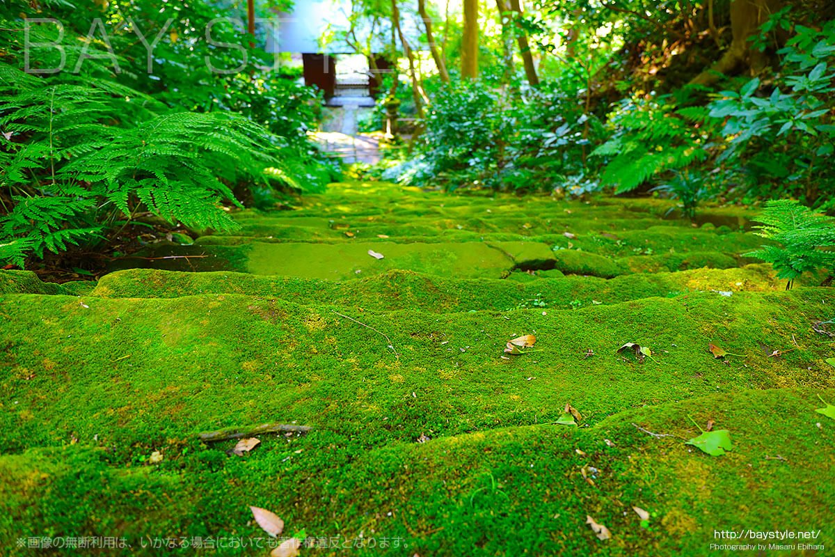 苔寺、妙法寺は鎌倉の自然豊かなパワースポット