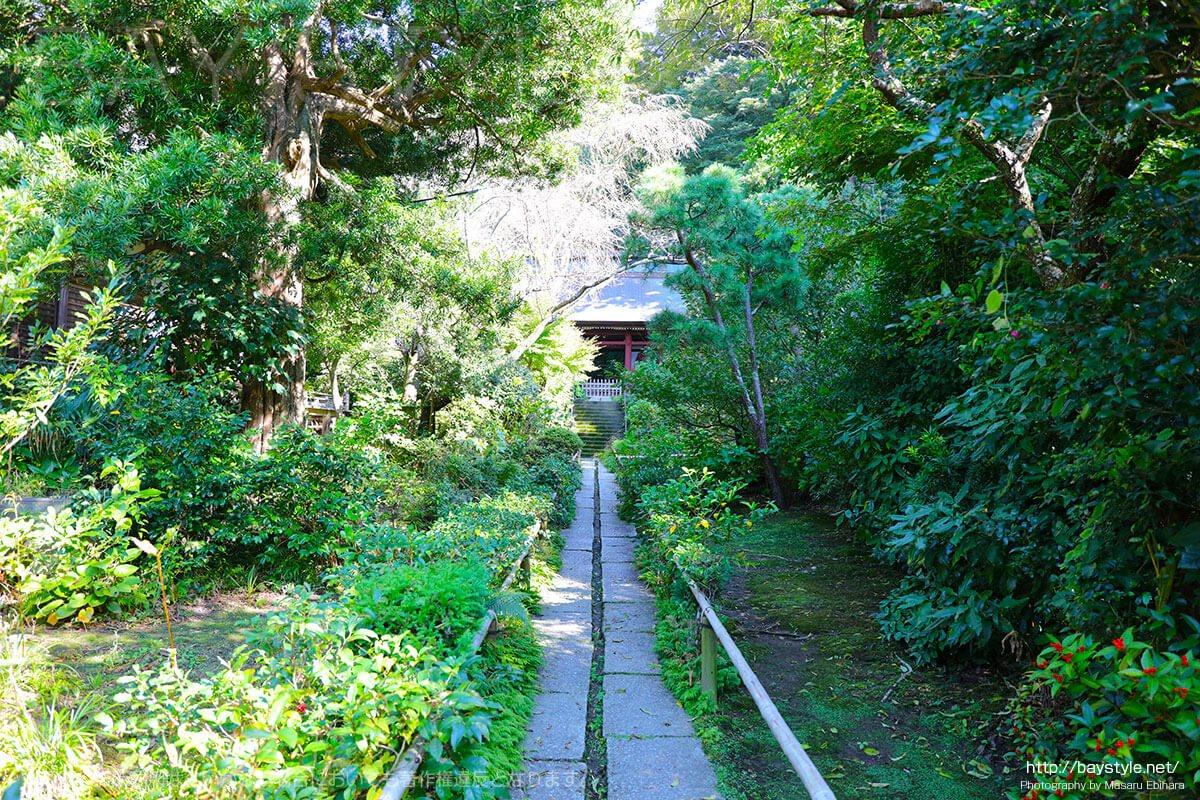 仁王門へと続く自然豊かな細道