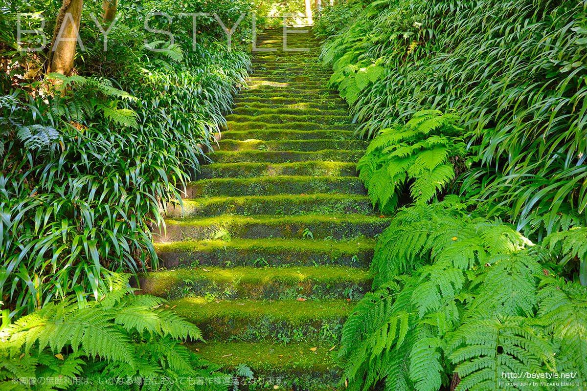 妙法寺の苔石段