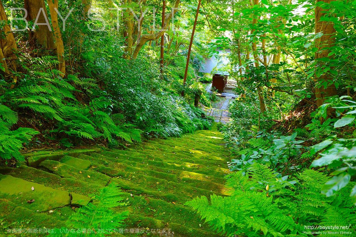 上から見下ろした妙法寺の苔石段