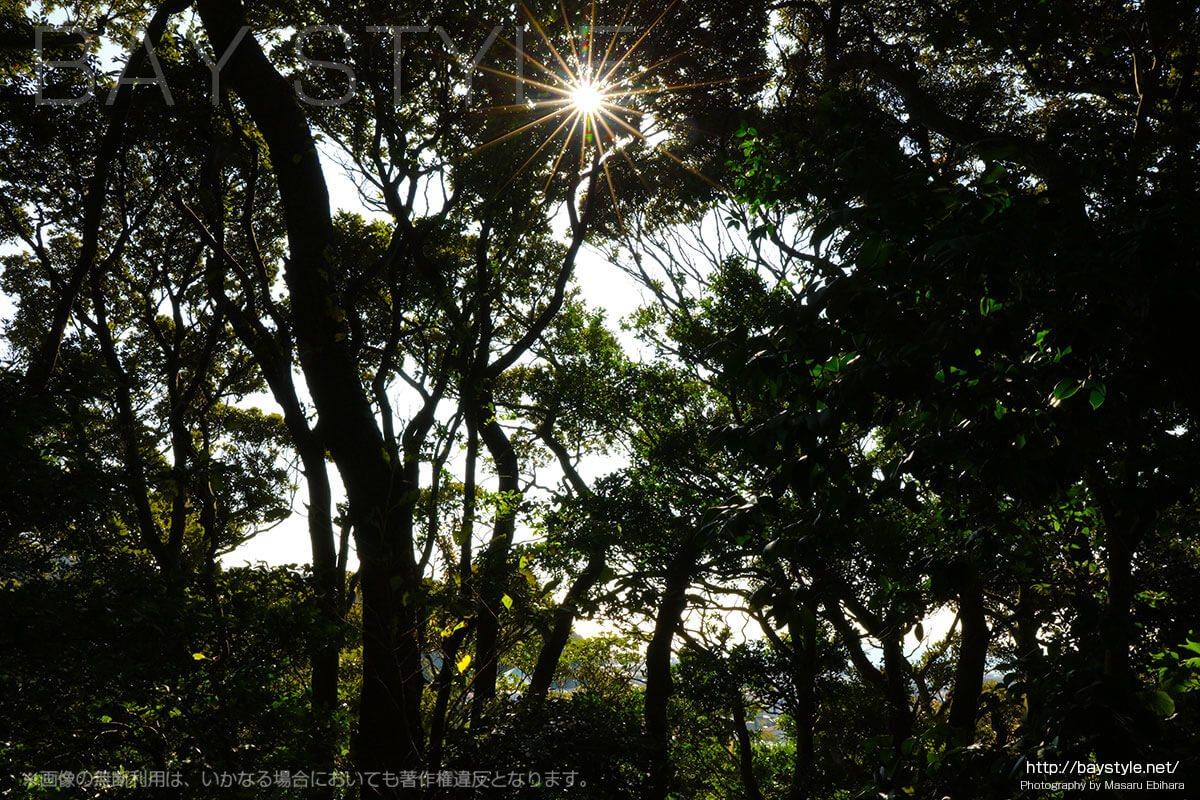日叡上人御墓と南の方御墓前の木漏れ日