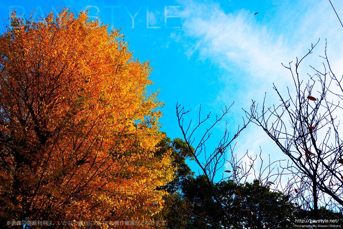 小動神社の紅葉