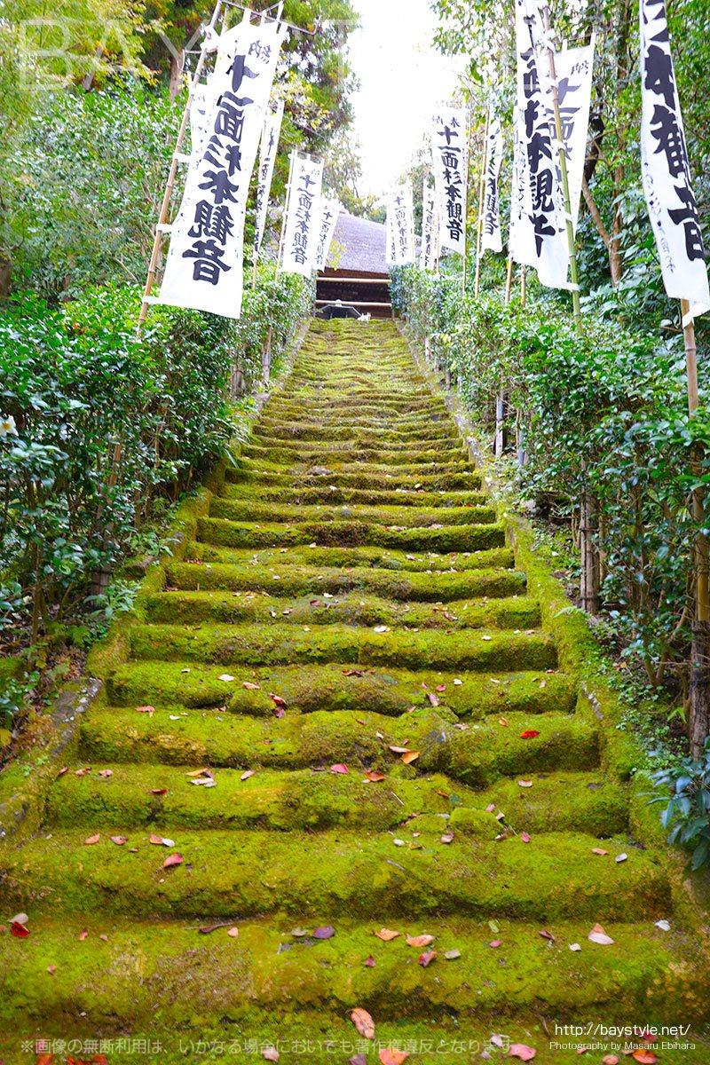 下から上に眺めた杉本寺の苔生す石段
