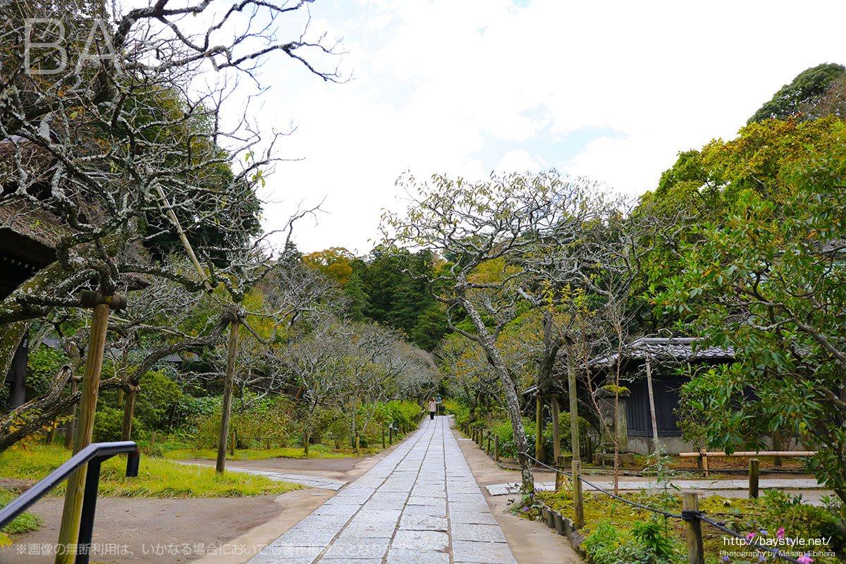 墓苑へと続く通路
