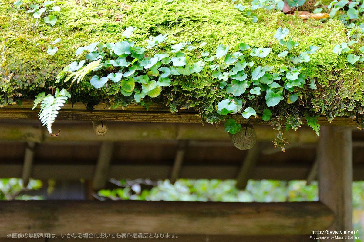 緑豊かな東慶寺の境内