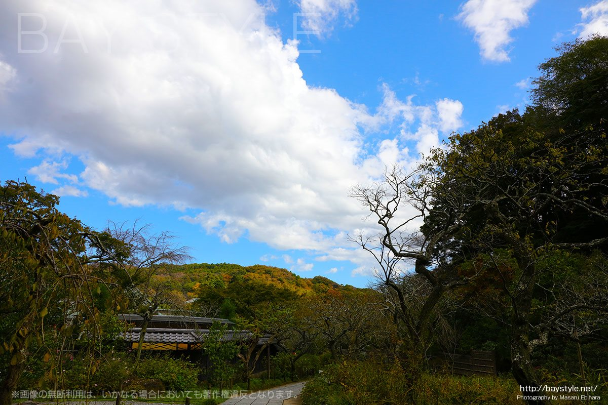 東慶寺の紅葉は11月下旬から12月上旬が見頃