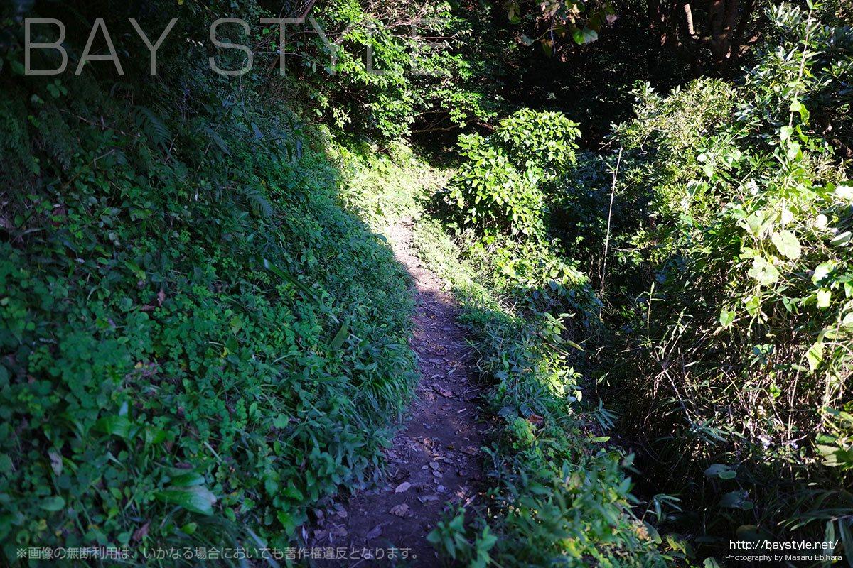 祇園山ハイキングコースの山道