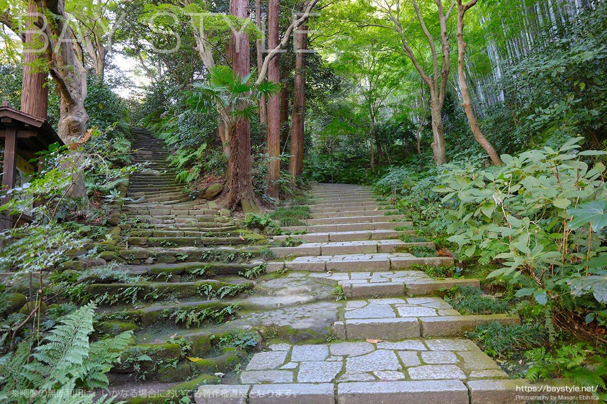 瑞泉寺境内へと向う階段