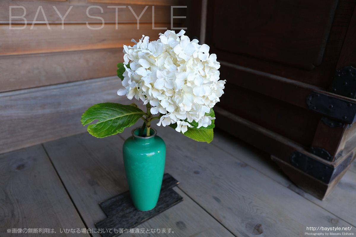 成就院の白い綺麗なアジサイ