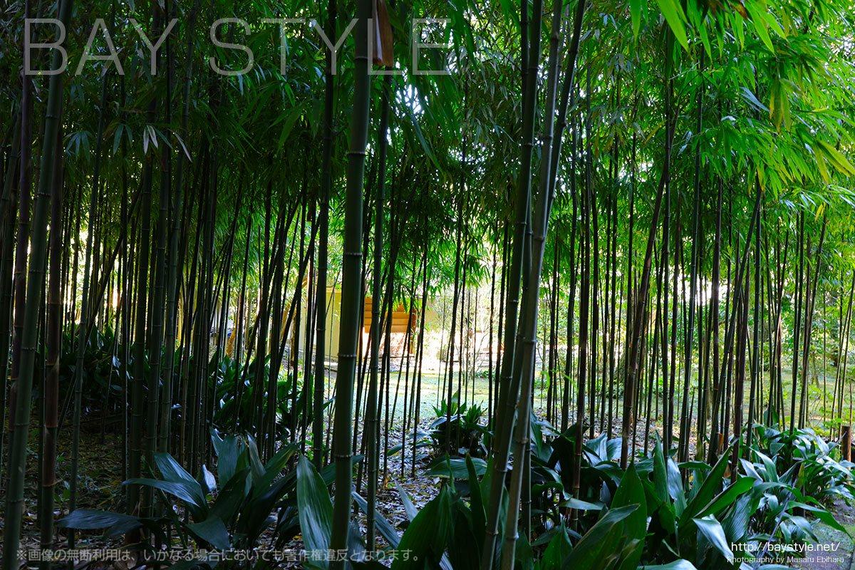 浄智寺の竹林