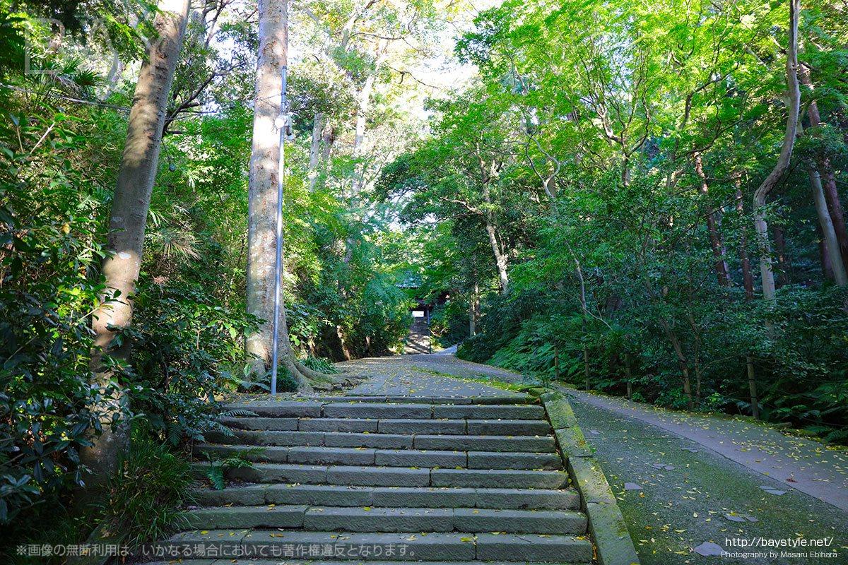 妙本寺の自然