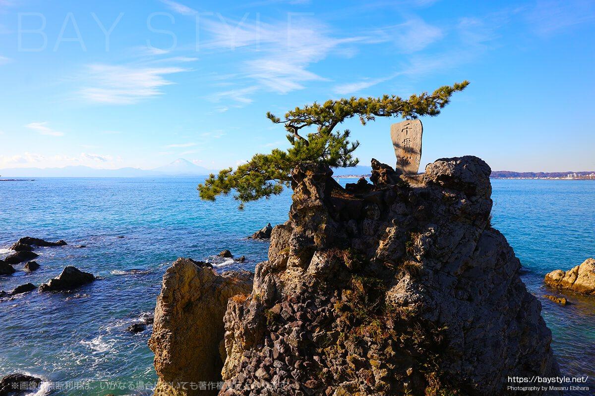 森戸神社で有名な千貫松