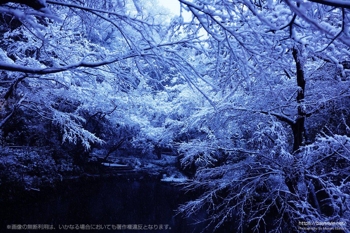雪が降る日の柳原神池