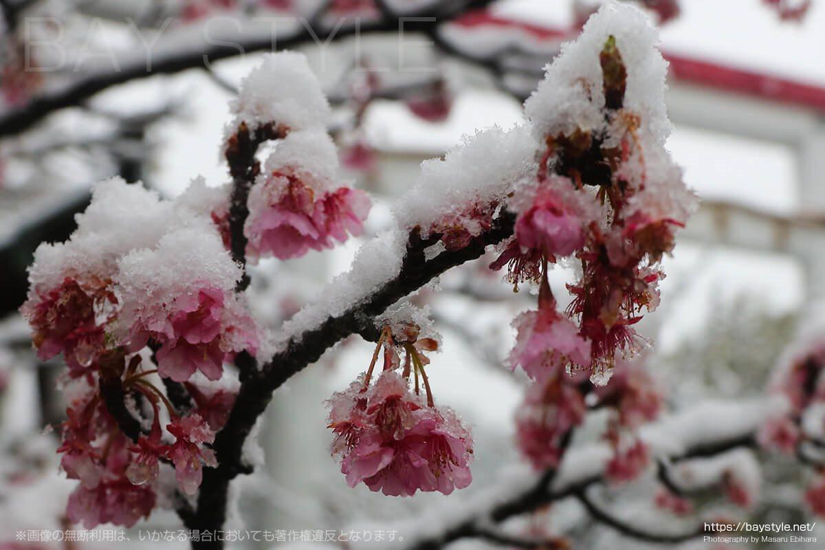 雪の鎌倉宮