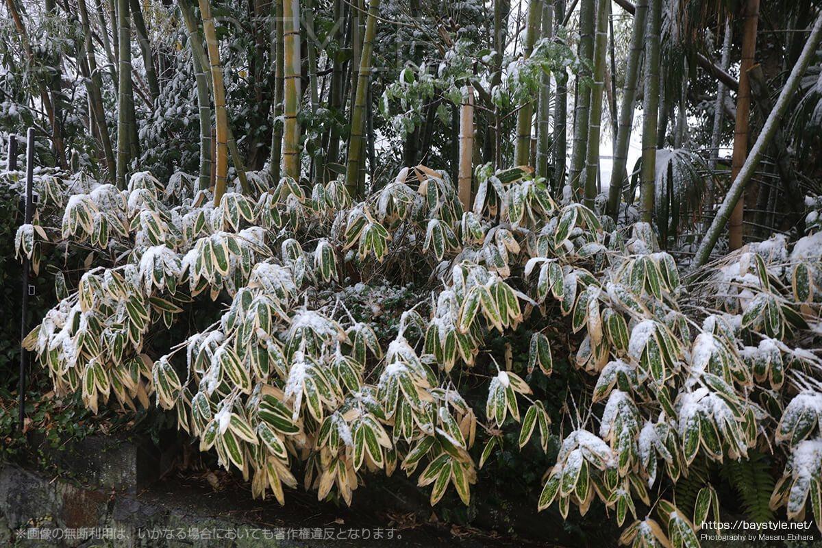 雪の日の覚園寺へ向う道