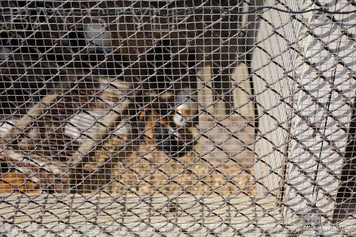 披露山公園のモルモットの檻