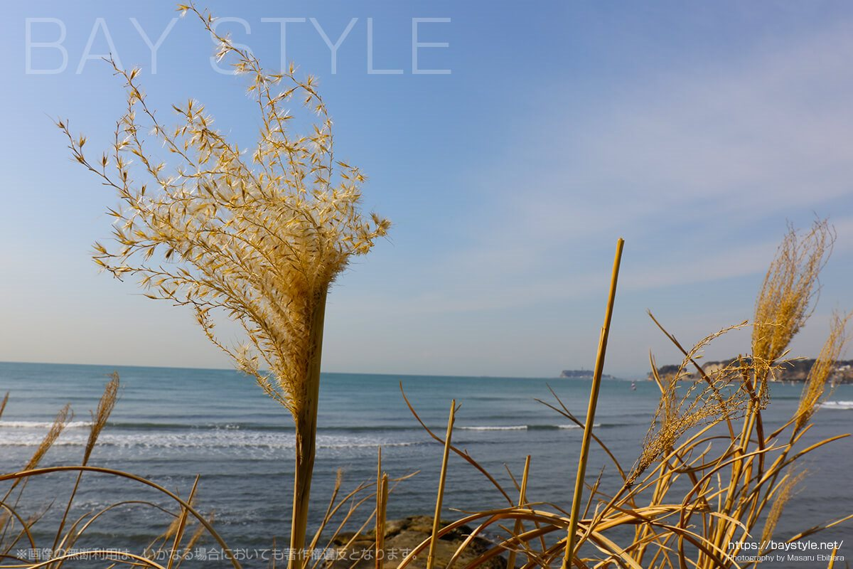 材木座海岸付近の眺め
