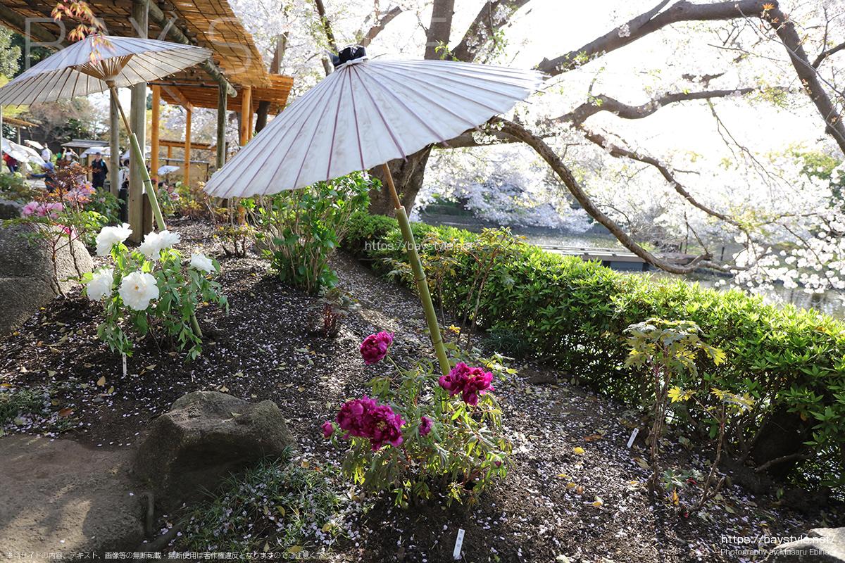神苑ぼたん庭園の入口付近