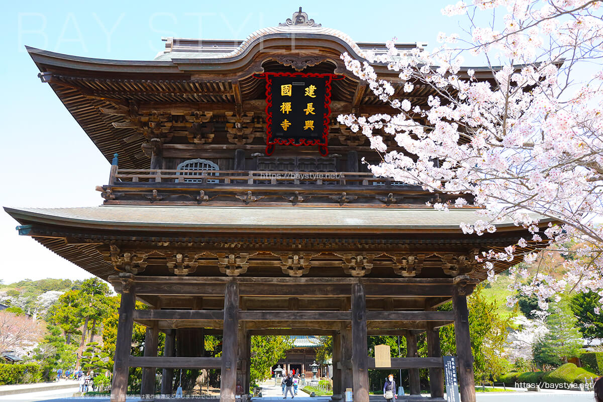 桜と重要文化財の三門