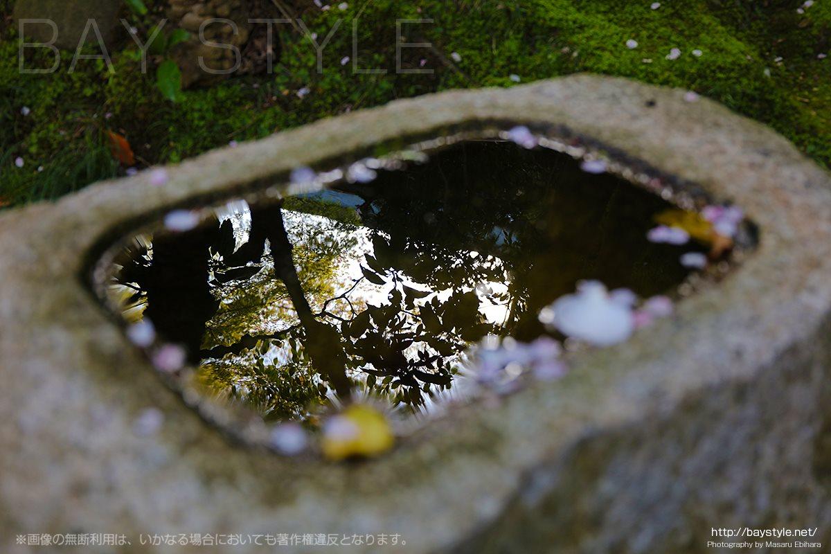 桜の季節の報国寺境内