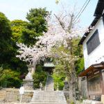 甘縄神明宮の桜