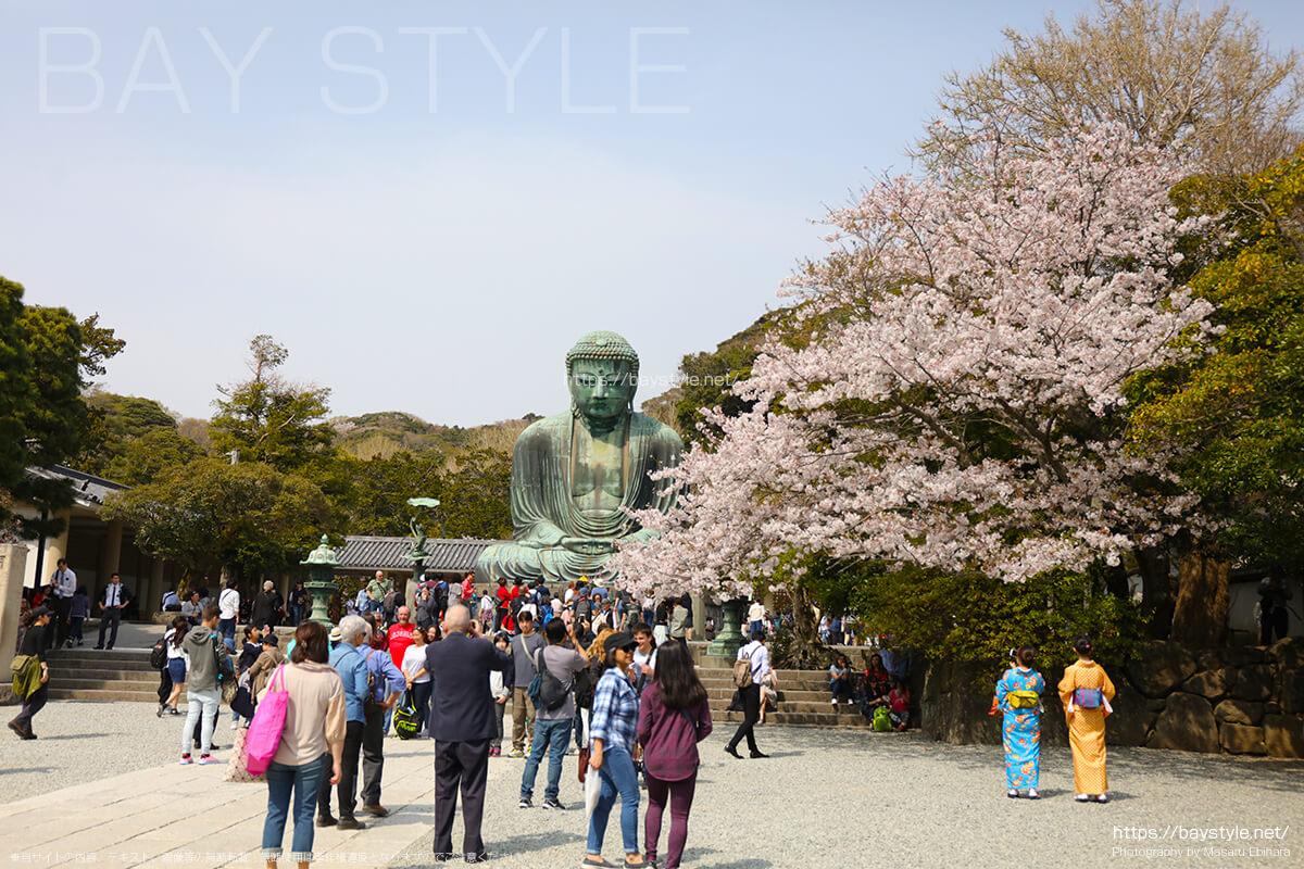 鎌倉の大仏と桜