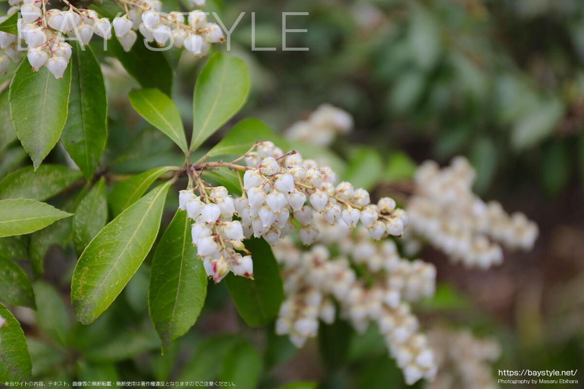 春の季節に咲く花