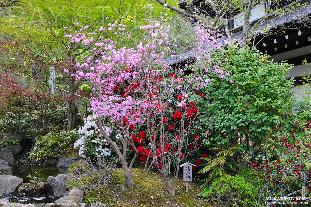 長谷寺で春に咲く花
