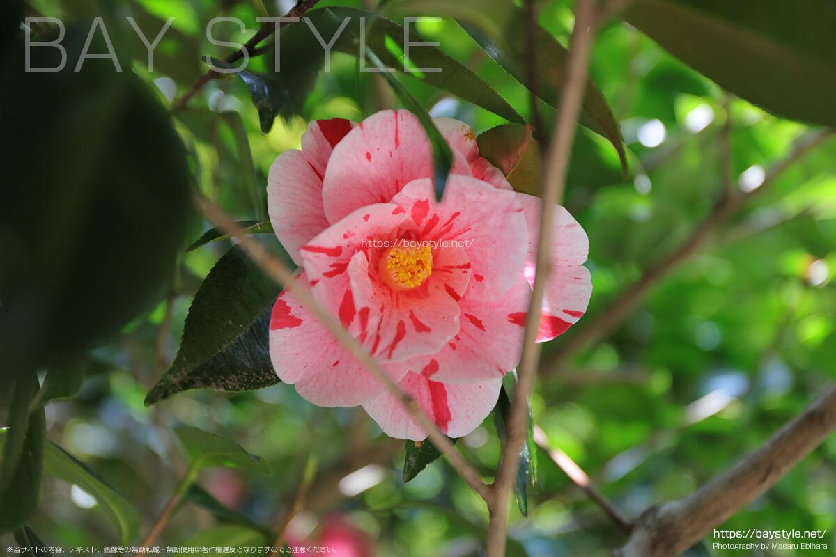 春の浄智寺の様子
