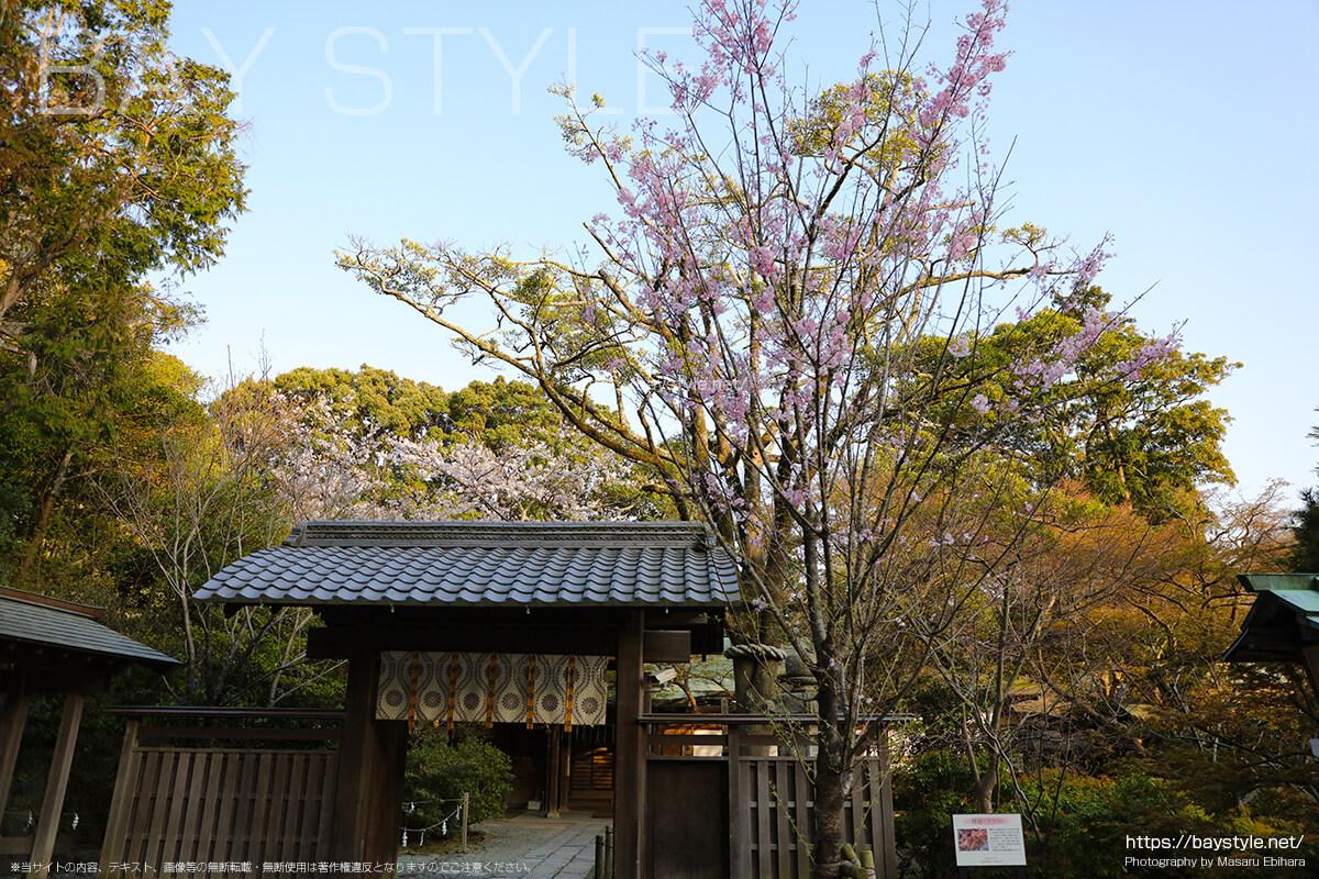 鎌倉宮の舞姫