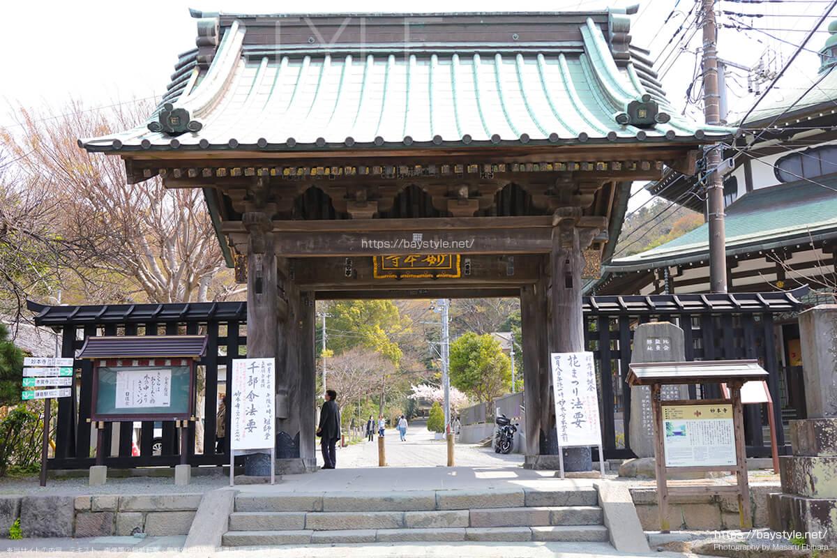 総門付近の桜