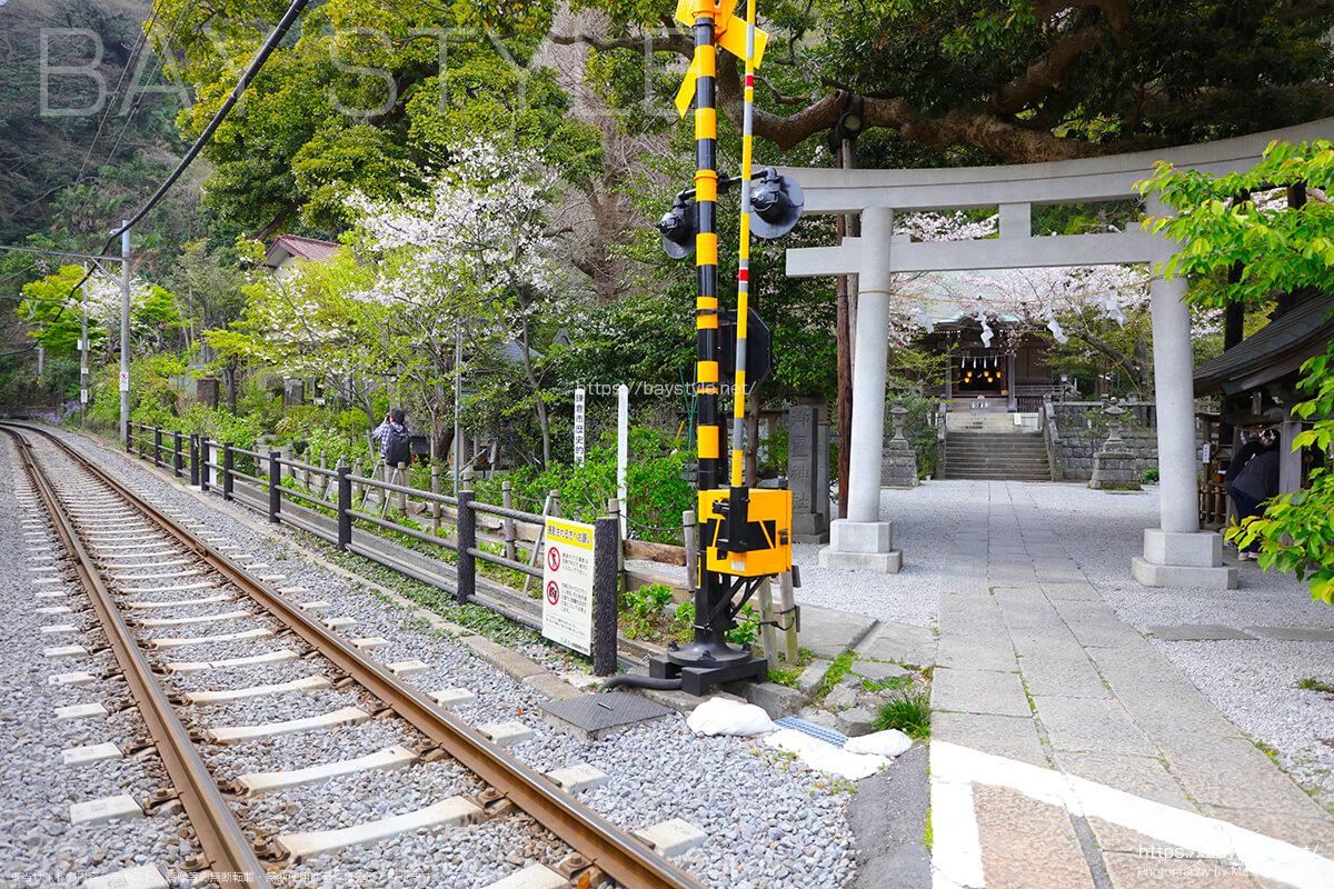 御霊神社前の線路沿いにある桜